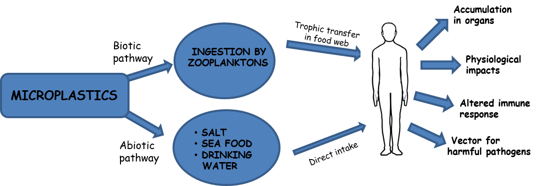 Microplastic in food chains
