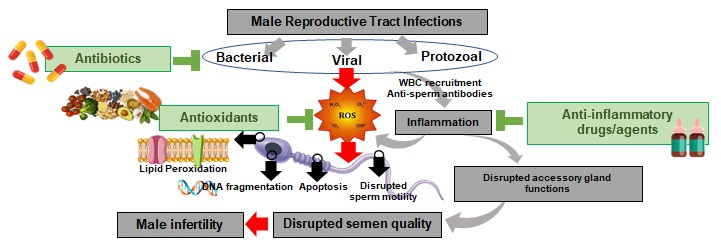 drugs and male infertility