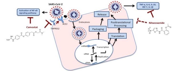 Nitazoxanide for COVID-19