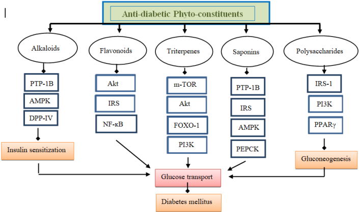 Mechanism of antidiabetic compounds