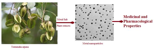 Nanobiotechnology of terminalia arjuna plant