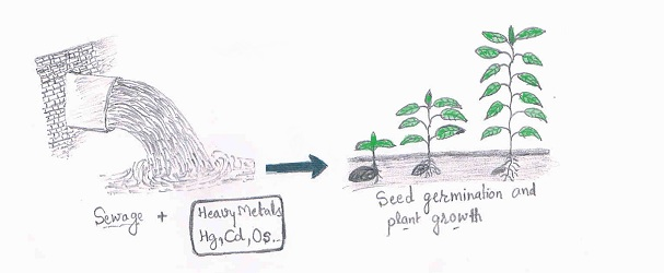 sewage and heavy metal effect on Plant growth